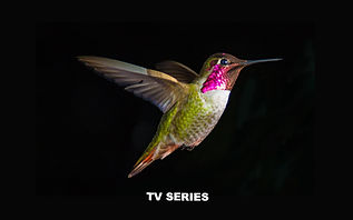 hummingbird-3840x2400-4k-5953_edited.jpg