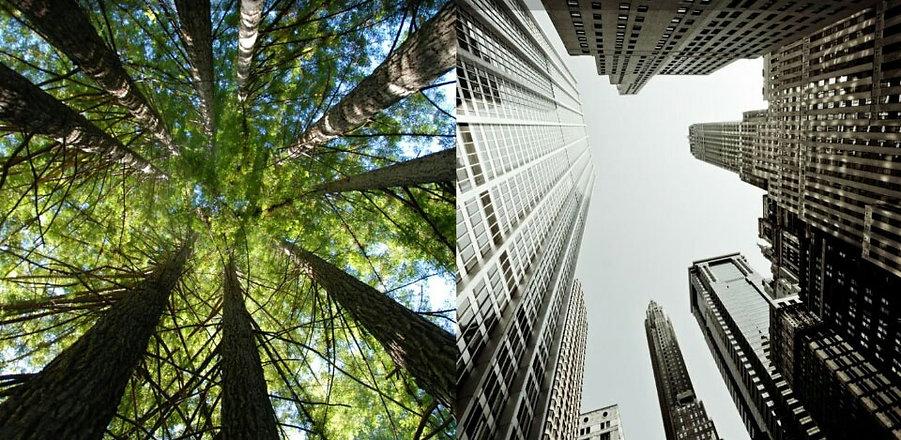 jungle-to-concrete-jungle-biodiversity-1