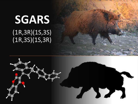 Accumulation of diastereomers of anticoagulant rodenticides in wild boar from suburban areas