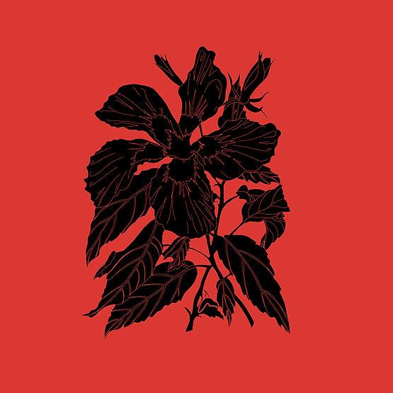 noir fond rouge.jpg