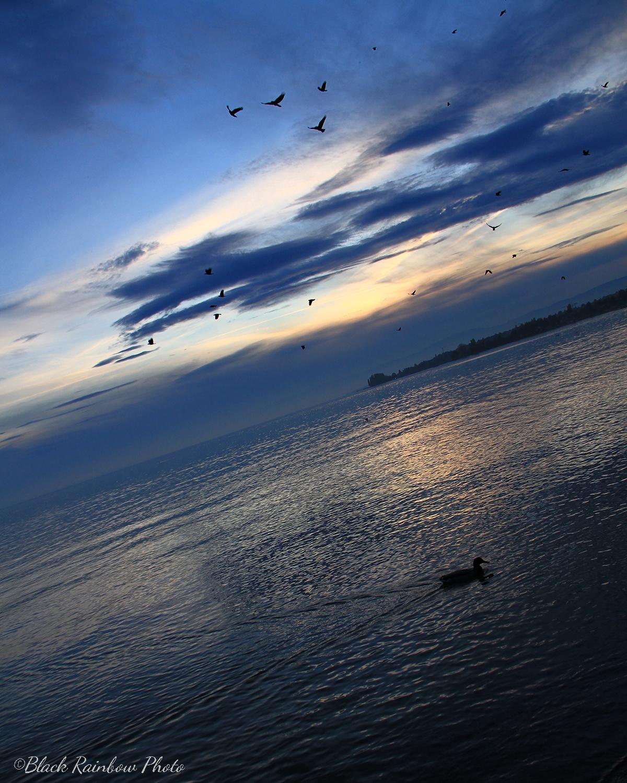 Vol de corbeau