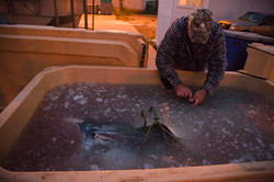 Tuna capital of the world - Fish freezer