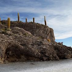 Cactus island02320sm no sign.jpg