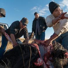 Buffalo Cut