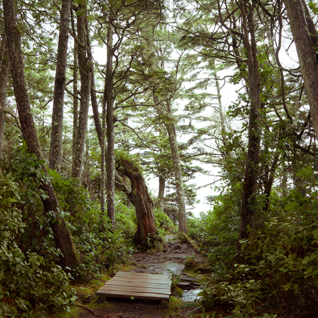 Mighty forest_9329_no sign.jpg