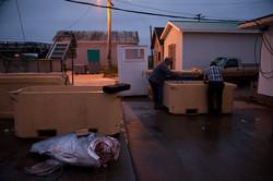 Tuna capital of the world 3