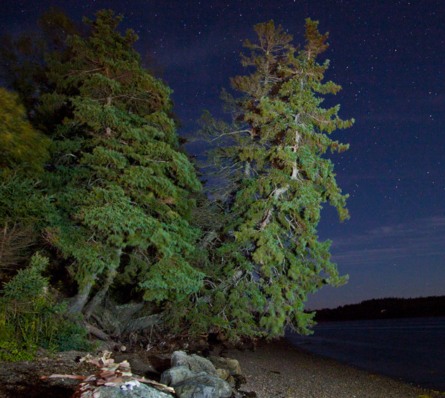 Night trees_6254no sign.jpg