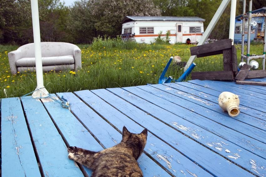 Cat P.U's view