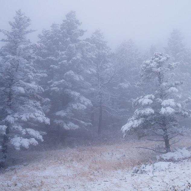Foggy Mountain2774sm.jpg