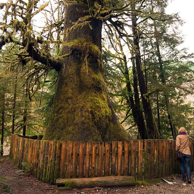 18Mighty Tree Spirit_9486sm.jpg