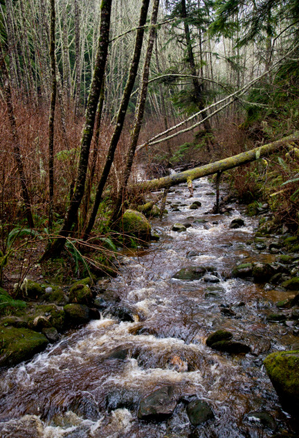 17Sacred forest's entry river_9106_no si
