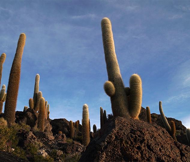CactusIsland02452sm no sign.jpg