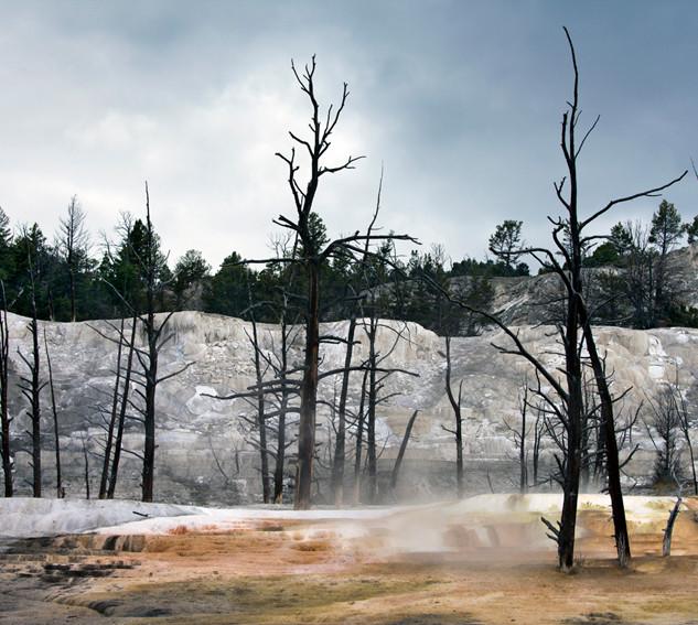 Apocalyptic trees