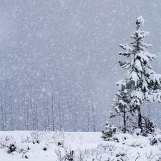 WinterFog 1tree2109sm.jpg