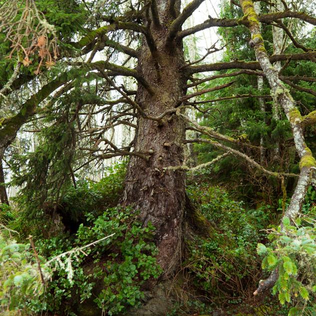 41Hugging tree_9463_no sign.jpg