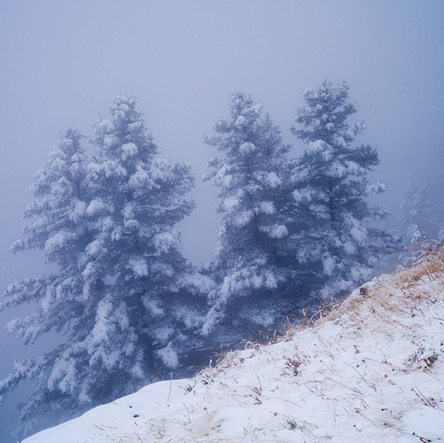 Foggy Mountain trio2775_sm.jpg