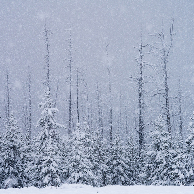 WinterFog forest2105sm.jpg