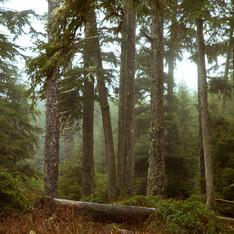 Misty forest_9281_no sign.jpg