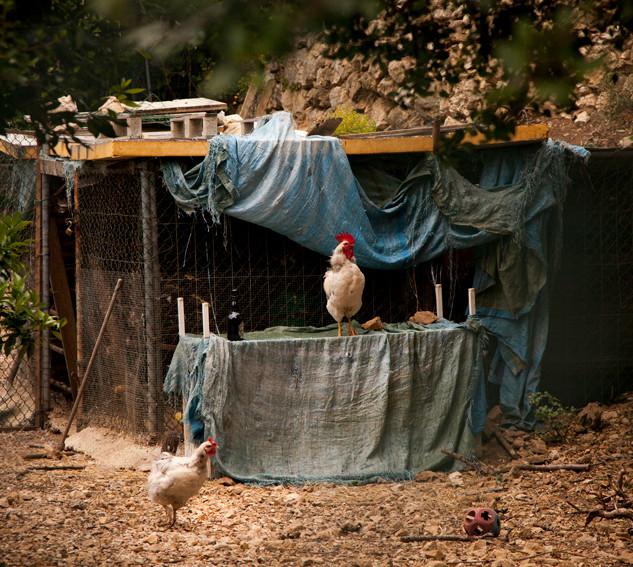 Chicken farm, France