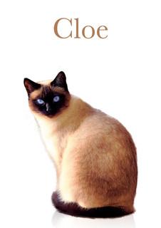 Cloe minimalista.jpg