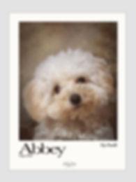 Perro dog retrato portrait04.jpg
