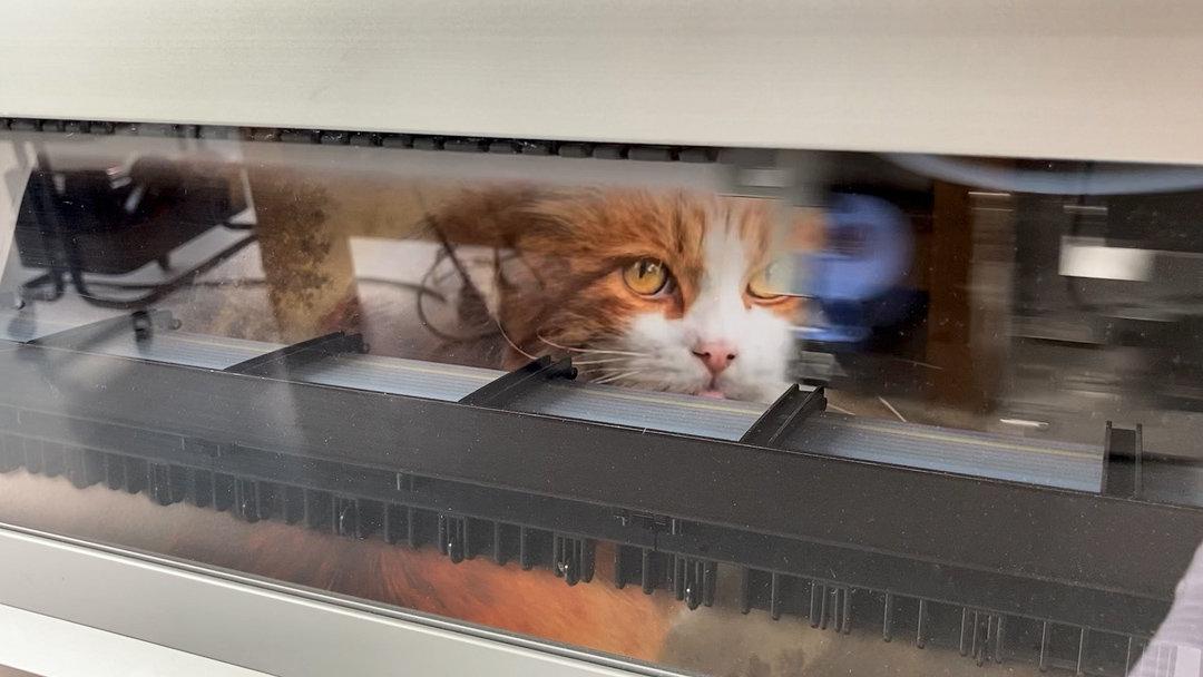 Impresion gato