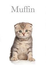 Muffin minimalista.jpg