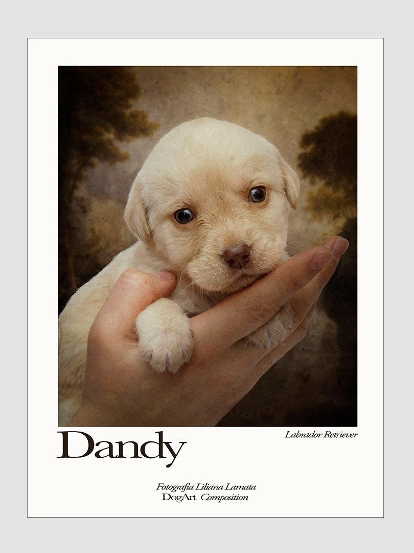 Web Dandy.jpg