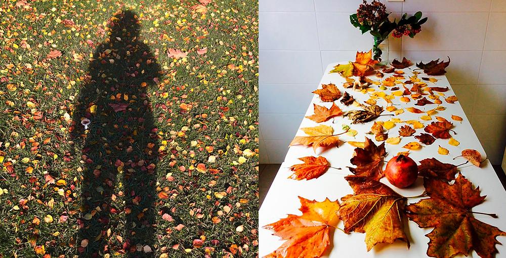 Recogiendo hojas para la sesión