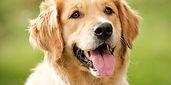 tengo-un-perro-sh.jpg