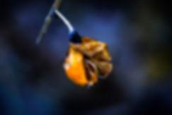Azul y Amarillo.jpg