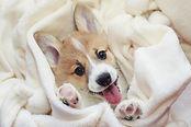 nombres_para_perros_originales_y_bonitos