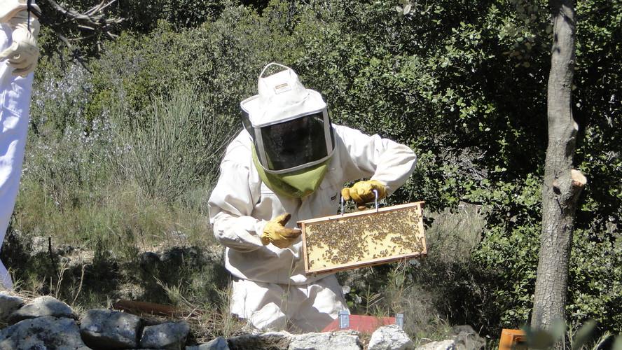 Introduction des rayons dans la nouvelle ruche