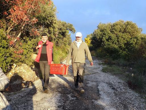 45 kg d'olives récoltés au verger !