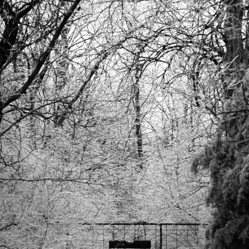 This photo was taken in a wooded area during a snow storm. I chose to include it as it has a nice composition and the ice makes for an pretty photo.
