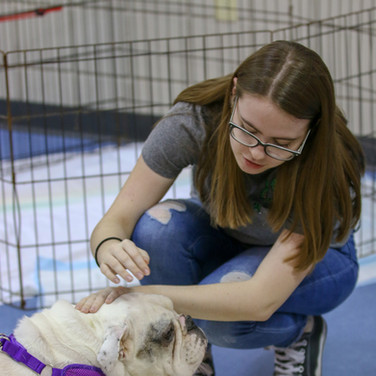 After leading a dog adoption project in school, I was able to take photos of students interacting with the dogs for the local paper.