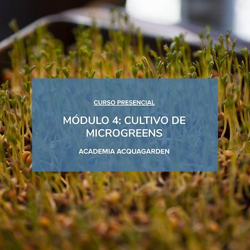 Módulo 4 - Cultivo de Microgreens - Presencial