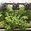 Thumbnail: Módulo 2 - Cultivos en interiores - Online