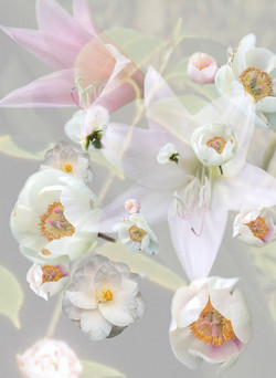 Bouquets/ Garlands