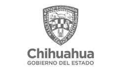 Gob Chihuahua