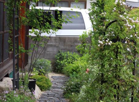 2020年5月の庭。