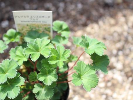 庭の植物記録。