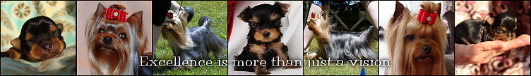 JaLa Yorkshire Terriers examples of excellence