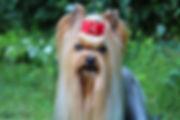Benny_11.jpg