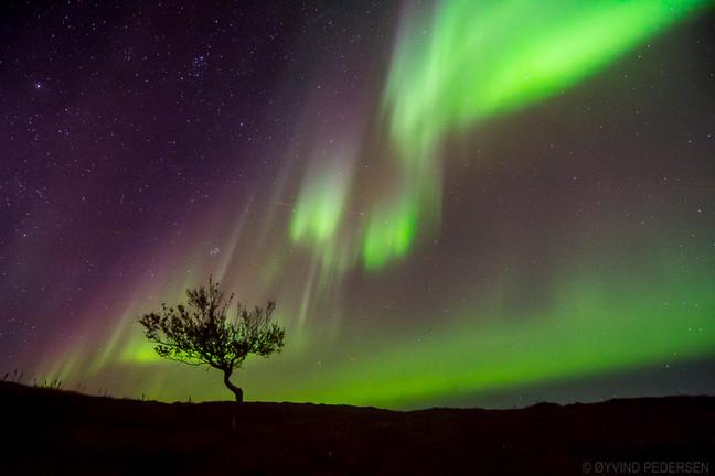 Aurora and the tree
