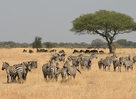 SAFARI IN TANZANIA: YOUR FAMILY'S GATEWAY TO AFRICA!