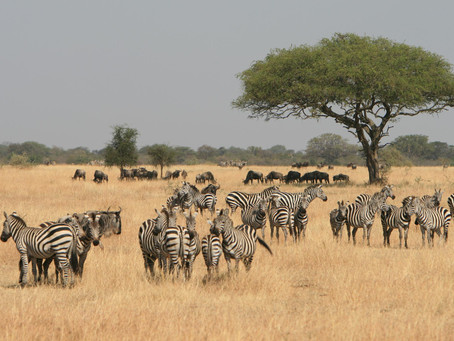 SAFARI IN TANZANIA: YOUR FAMILY'S GATEWAY TO AFRICA!
