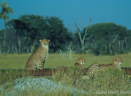 Awe-inspiring Zimbabwe: Conservation Safari Highlights
