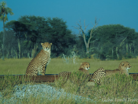 Awe-inspiring Zimbabwe: Conservation Safari Highlights