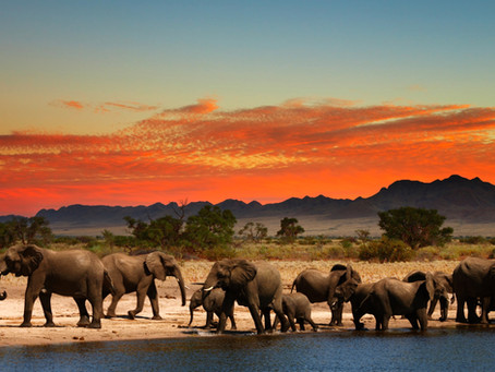 African Safaris: 10 Tips to Plan and Support Conservation & Communities during Covid-19